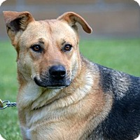 Adopt A Pet :: Ella - Downey, CA