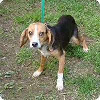 Adopt A Pet :: Porsche - Dumfries, VA