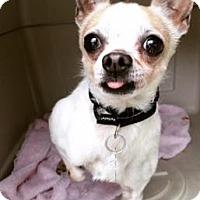 Adopt A Pet :: Rodney - Oak Park, IL