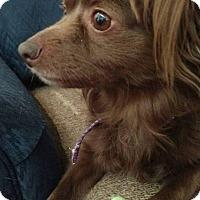 Adopt A Pet :: CoCo - Bucks County, PA