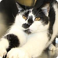 Adopt A Pet :: Zapper - Waynesboro, PA