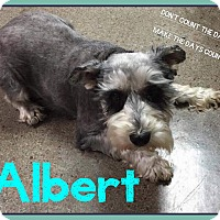 Adopt A Pet :: Albert - Fort Wayne, IN