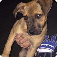 Adopt A Pet :: Gertrude - Del Rio, TX