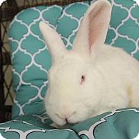Adopt A Pet :: Paddington - Hillside, NJ