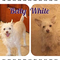 Adopt A Pet :: Betty White - Phoenix, AZ