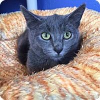 Adopt A Pet :: Acorn - Atlanta, GA