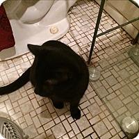 Adopt A Pet :: Mickey - Rochester, NY