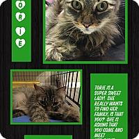 Adopt A Pet :: Torie - CLEVELAND, OH