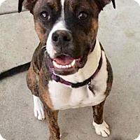 Adopt A Pet :: Lola - Mission viejo, CA