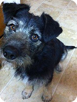 Tracy S Dog Adoption