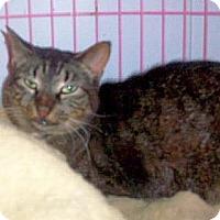 Adopt A Pet :: Toni - Hudson, NY