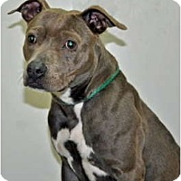 Adopt A Pet :: Skye - Port Washington, NY