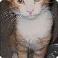 Adopt A Pet :: Milo - Elverta, CA