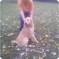 Adopt A Pet :: Titan-adopted - Murfreesboro, TN