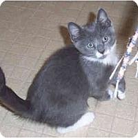 Adopt A Pet :: Abraham - Colmar, PA