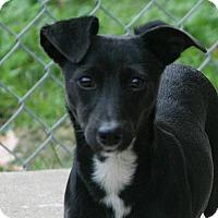 Adopt A Pet :: Scamp - Lufkin, TX