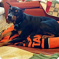 Adopt A Pet :: Frankie - New Richmond, OH