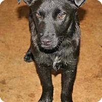 Adopt A Pet :: Tucker - Tampa, FL