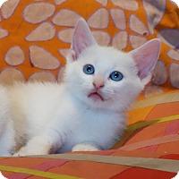 Adopt A Pet :: Luc - Brooklyn, NY