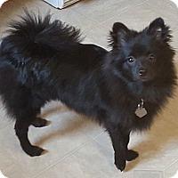 Adopt A Pet :: Romeo - Jacksonville, FL