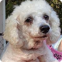 Adopt A Pet :: Biddy - Crump, TN