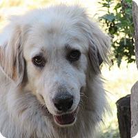 Adopt A Pet :: Brandy  Adopted - Tulsa, OK