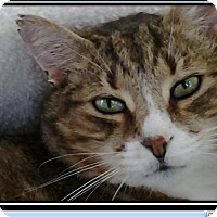 Adopt A Pet :: Floyd_Courtesy Post - Columbia, MD