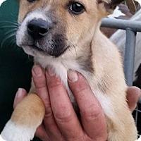Adopt A Pet :: Forest - Gainesville, FL