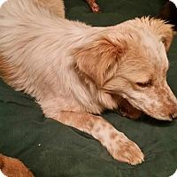 Adopt A Pet :: Merlin - Tucson, AZ