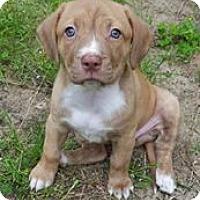 Adopt A Pet :: Vana - Gainesville, FL