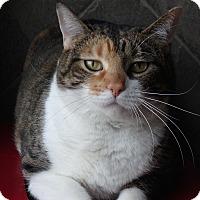 Adopt A Pet :: Willa - Seguin, TX