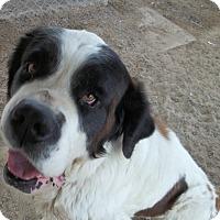 Adopt A Pet :: Ricky - Sparks, NV