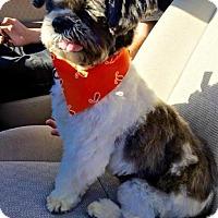 Adopt A Pet :: Fetty - Manhattan Beach, CA