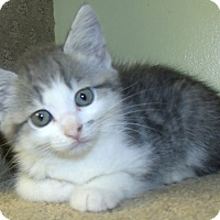 Adopt A Pet :: MIRAGE - Acme, PA