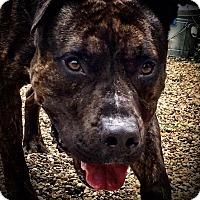 Adopt A Pet :: Balboa - Cleveland, OH