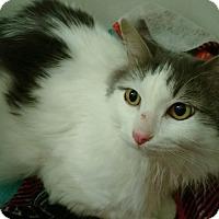 Adopt A Pet :: Ernie - Garland, TX