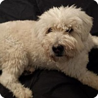 Adopt A Pet :: Lacy - Tucson, AZ