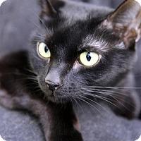 Adopt A Pet :: Navi - Brooklyn, NY