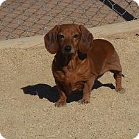 Adopt A Pet :: Abigail - Anaheim, CA