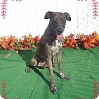 Adopt A Pet :: SALLY - Marietta, GA