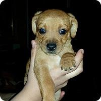 Adopt A Pet :: Tiny - Grass Valley, CA