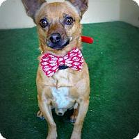 Adopt A Pet :: Crumpet - Casa Grande, AZ