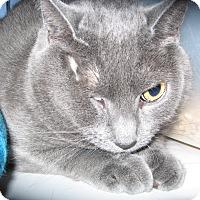 Adopt A Pet :: Rita - Colmar, PA