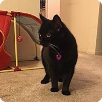 Adopt A Pet :: Piper - Sherman Oaks, CA
