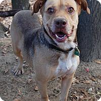 Adopt A Pet :: Molly - Aiken, SC