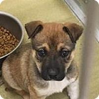Adopt A Pet :: Farren - Aurora, CO