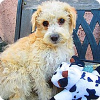 Adopt A Pet :: Timmy - Culver City, CA