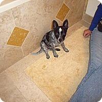 Adopt A Pet :: Choo - Adoption Pending - Phoenix, AZ