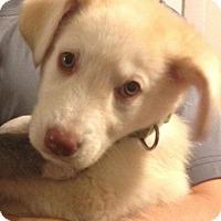 Adopt A Pet :: Phoebe - Saskatoon, SK