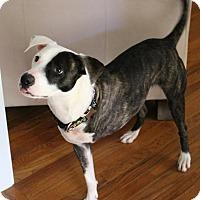 Adopt A Pet :: Frank - Atlanta, GA